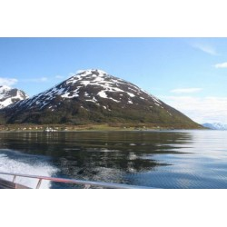 Lauksundet Fishing Skjervøy , Troms