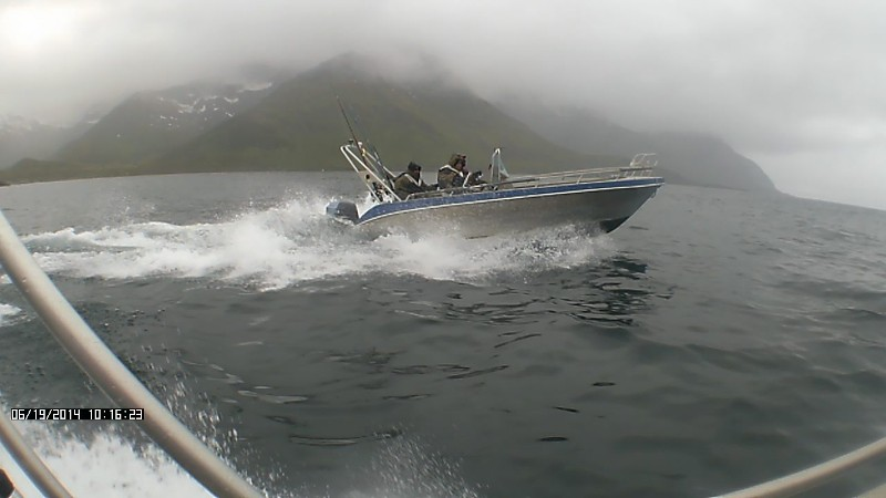 Zvejyba